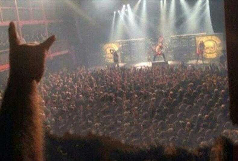 А вы берете своего питомца на рок-концерты?