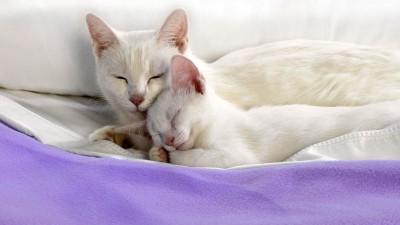 Обои - кошки 1080p